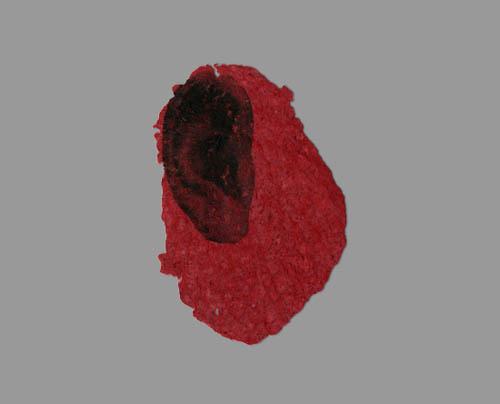 Ohr (Intime Stücke 1)